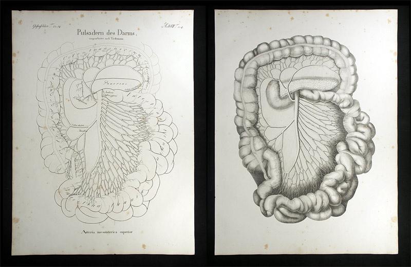 Oesterreicher, Johann Heinrich (1805-1843): Pulsadern des Darms ...