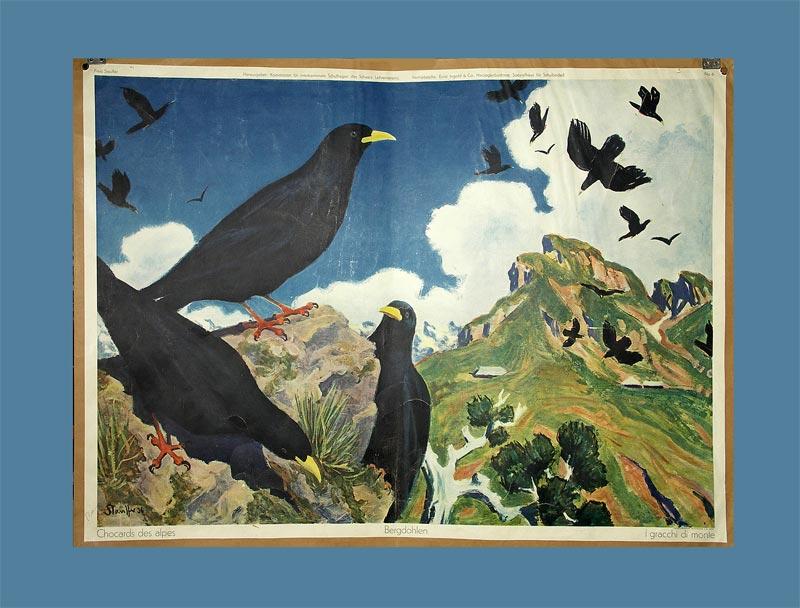 Stauffer, Fred (1892 - 1980): - Bergdohlen.