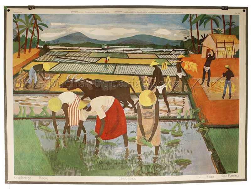 Item, Georges (1927–1990): - Reisplantage - Rizère - Orbis pictus - Risaia - Rice planting.